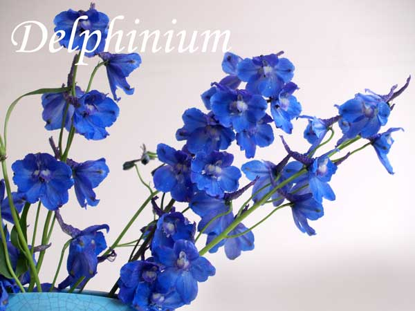 blue wedding flowers Delphinium