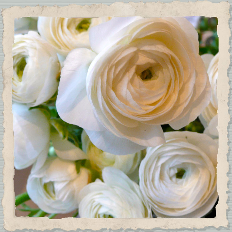 white ranunculas,evesham wedding flowers
